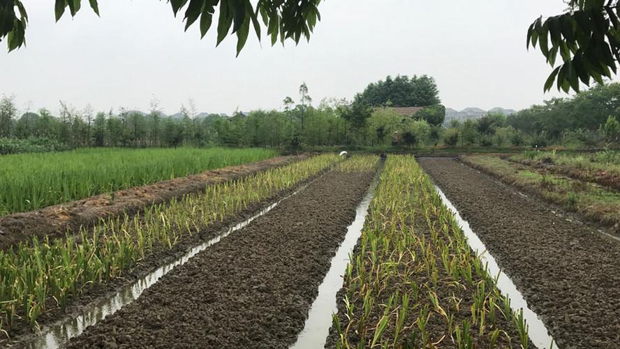 SMARTLAND visits wetland vegetation nursery in Hangzhou