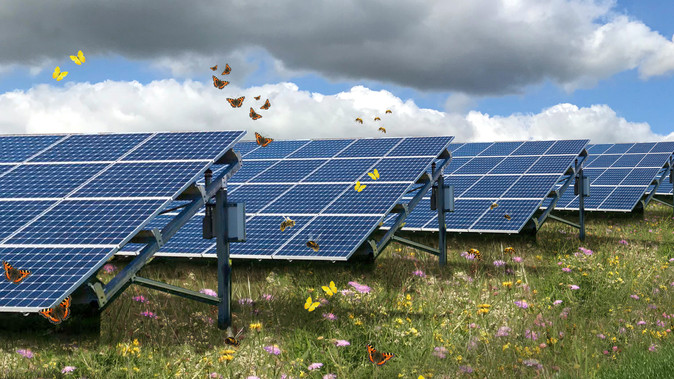 The positive influence of solar parks on biodiversity