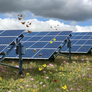 Onderzoek optimalisering biodiversiteit in zonneparken