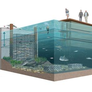 Onderwaternatuur Rotterdam