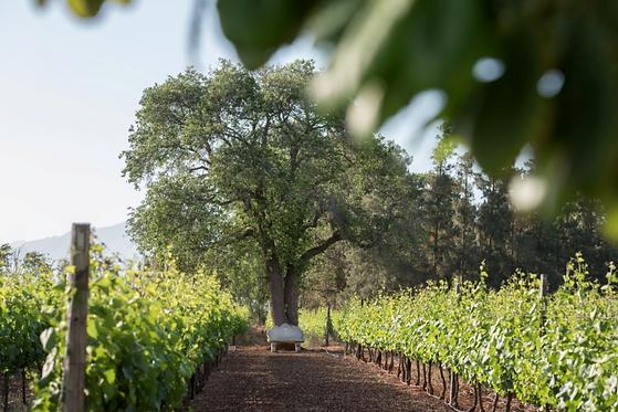 African Signature Wine De Wetshof (1).pn