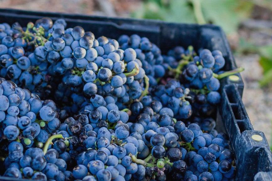 Basket full of Blue Berries