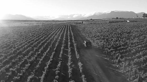 Vilafonté wineyards