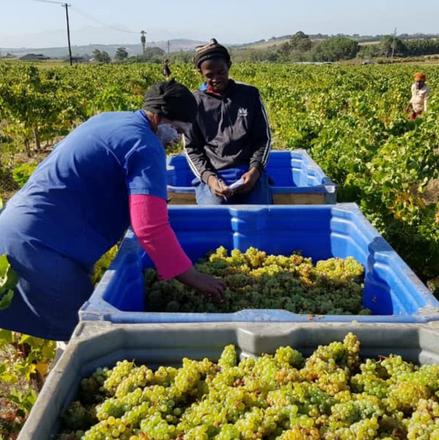 African Signature Wine B Vintners (2).pn
