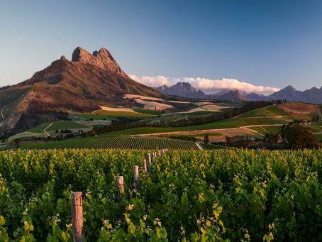 De wijnregio Stellenbosch