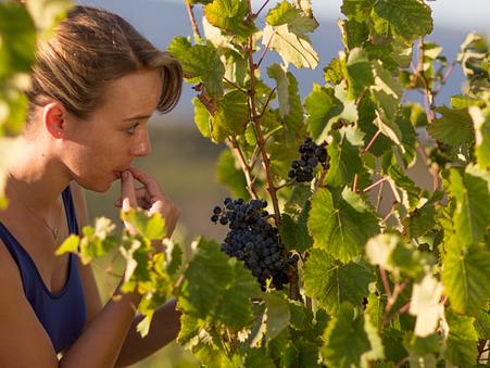 3 reasons why we like False Bay Wines
