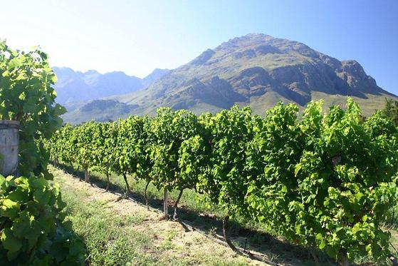 African Signature Wine Waverly Hills (1)