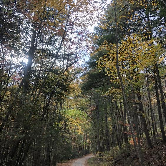 Hiking at High Shoals Falls Loop Trail