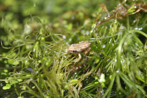 From little tadpoles do (tiny) frogs grow