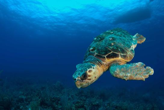 Explore Turtles in Cape Verde