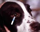 תסמונת העין היבשה בכלב