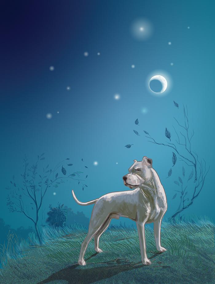 Dog Poem illi