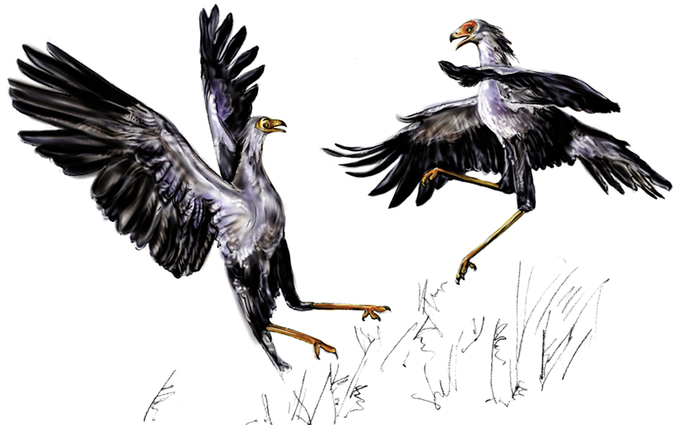 Secretary Birds