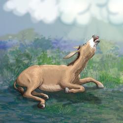 Crying donkey