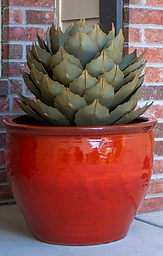 Metal Succulent_Artichoke Agave