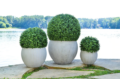 Faux Boxwood all sizes.png