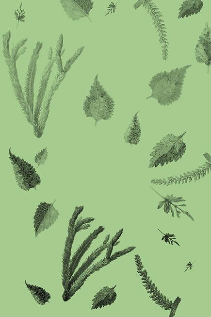 Plantas y hojas