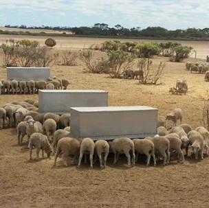 1500ltr (1ton) Sheep,Calf,Chickin Feeder