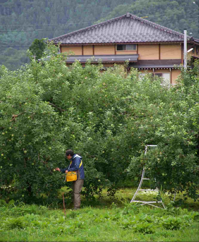 Pommes japon Nagano