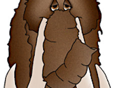 #806 Willy Wooly