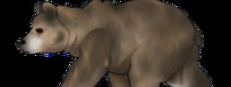 #899 Brown Bear