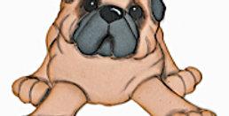 #762 Pug Pup