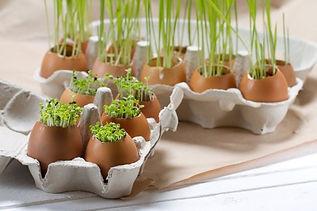 Macetas-cáscara-huevo.jpg