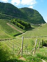 vineyard-1053802_1920.jpg