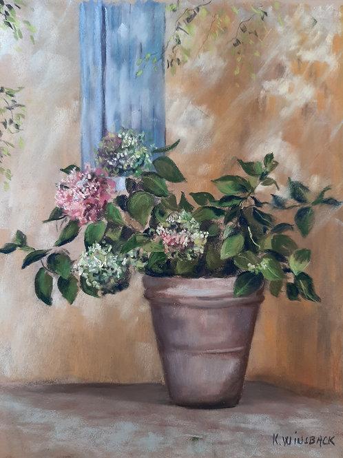 Les hortensias