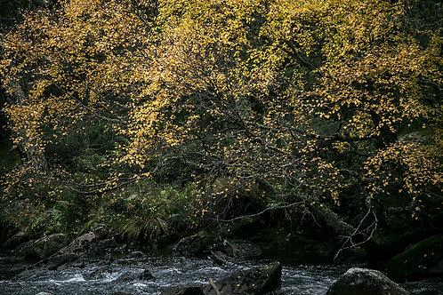 Forêt ripisylve