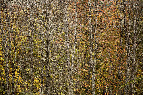 Couleurs de l'automne