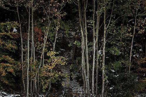 Forêt et première neige