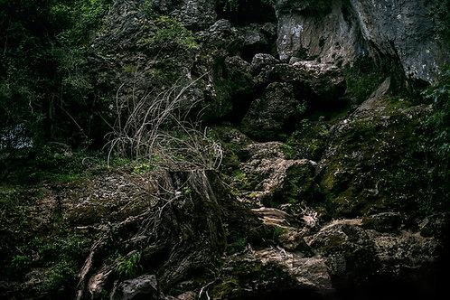 Souche sur rocher