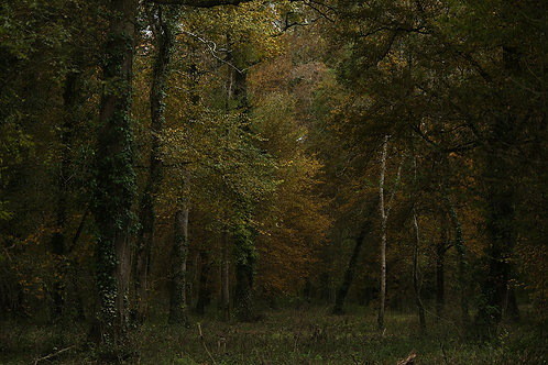 Coeur de forêt