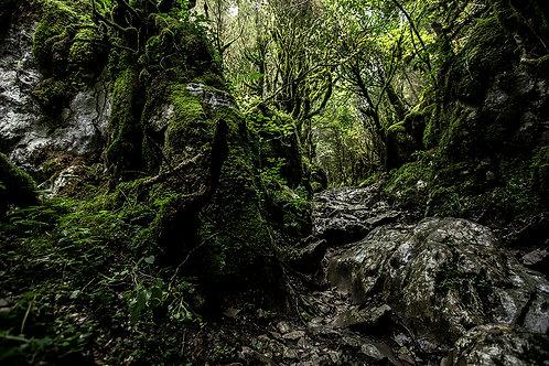 Passage sous couvert de la forêt