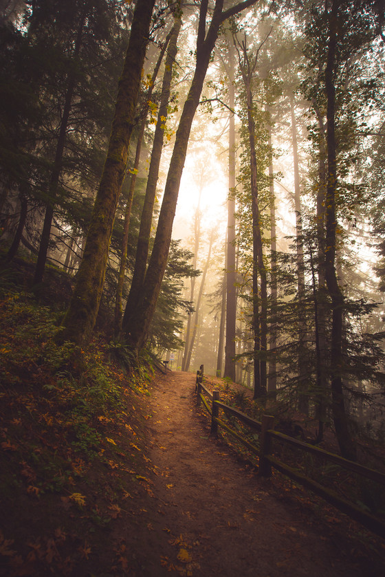 Beginner's guide to taking better trail shots. (Even with your smartphone)
