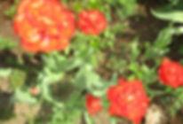 Май Цветы 2 04.30.2019.jpg