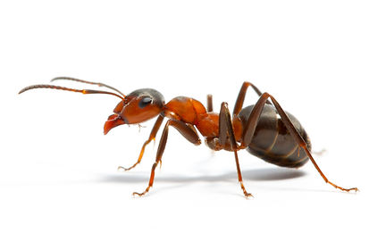 Ant-Control-Melbourne.jpg