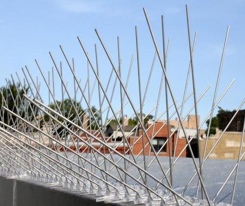 bird-spikes-500x500.jpeg