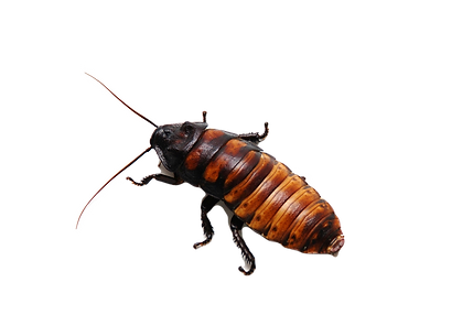 roach_edited.png