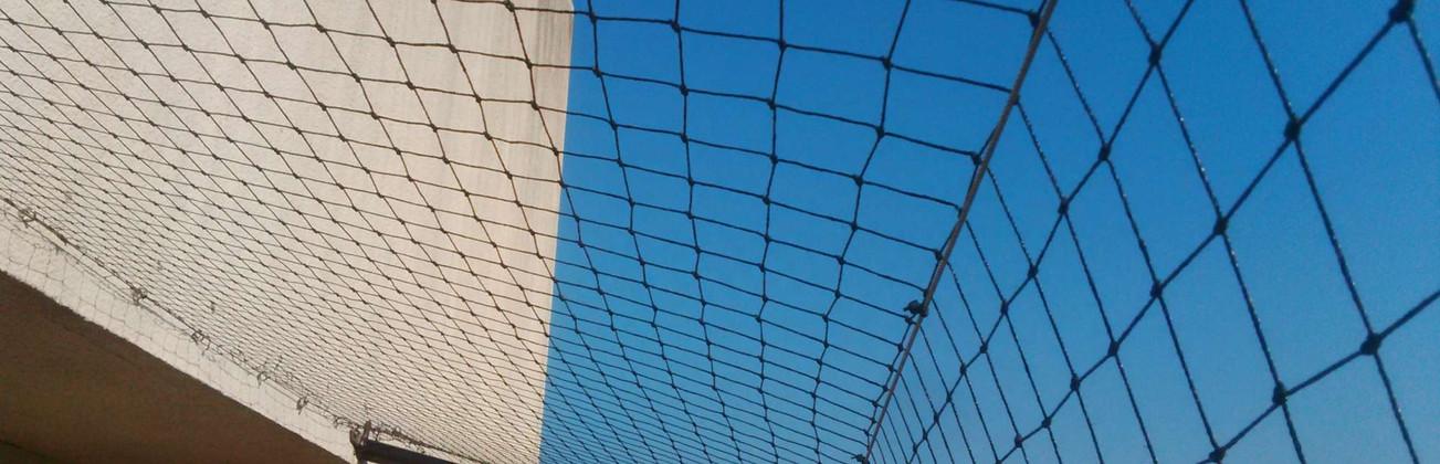 ananya-pigeon-net-services-kothrud-pune-