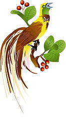 paradijsvogel-in-kleur.jpg