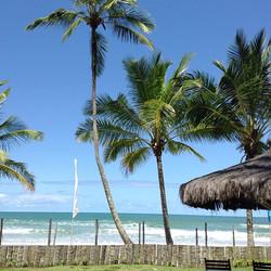 coqueiros e mar azul
