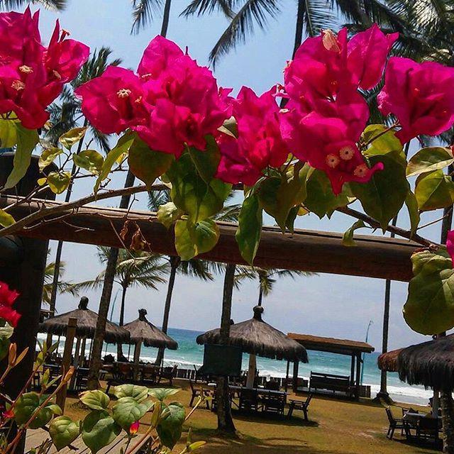 Lounge e flores