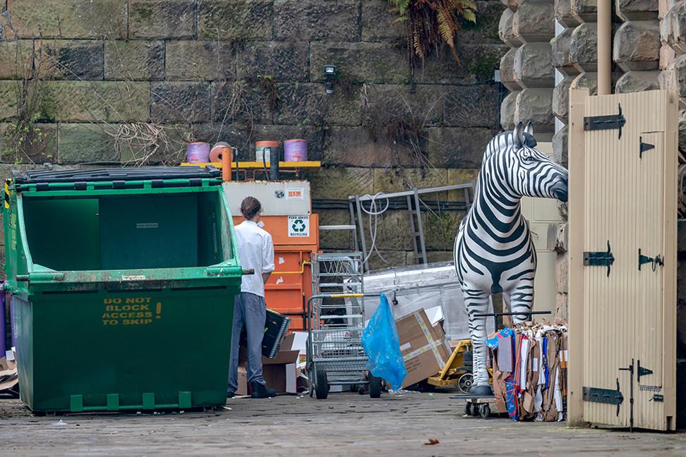 Discarded Zebra.jpg