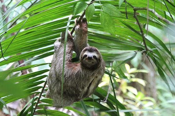 Sloth.jpg