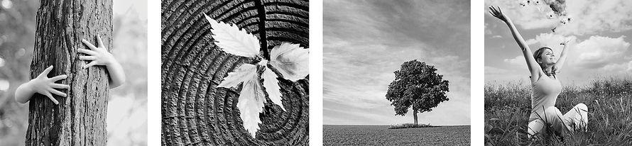 Immagini legate alla natura. Corteccia, foglia, albero e prato