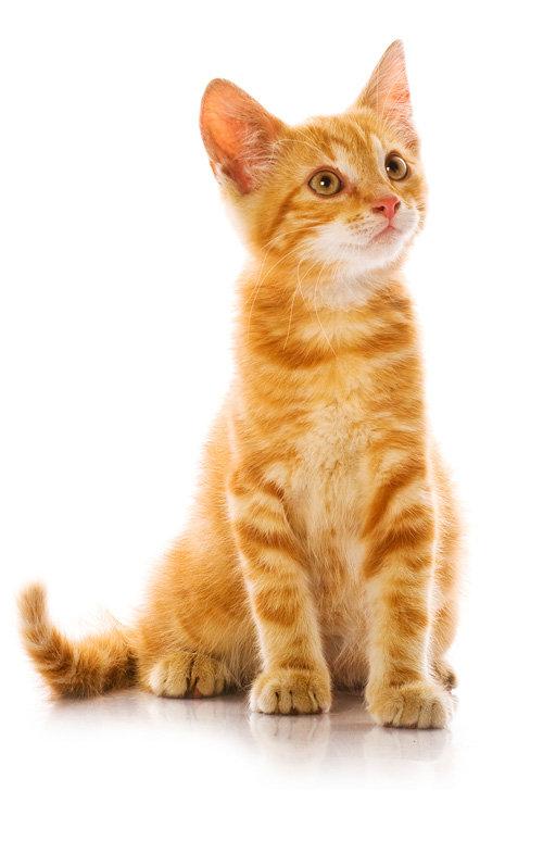 junge Katze in rot