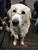 Corrie Thomas - Puppy sitter