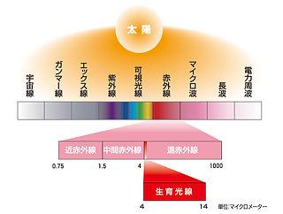 生育光線.jpg